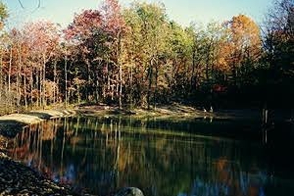 Our pond in the fall....