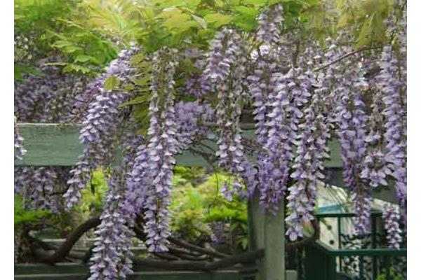 La Paloma Las Flores Avalon California