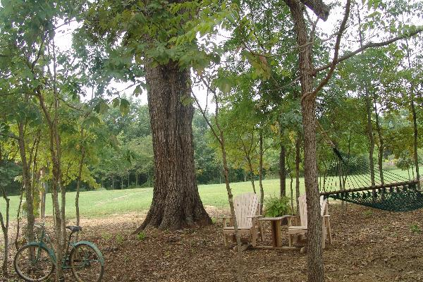 Relax under a  250+ year old Oak tree